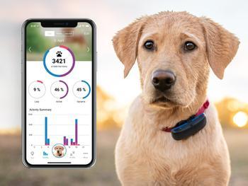 Tractive GPS-jäljitin Koiralle